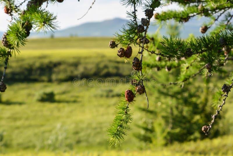 Pogórze tundra obrazy royalty free