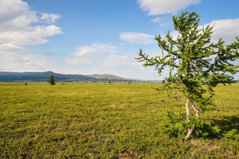 Pogórze tundra obraz royalty free