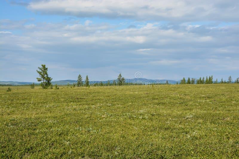 Pogórze tundra fotografia stock