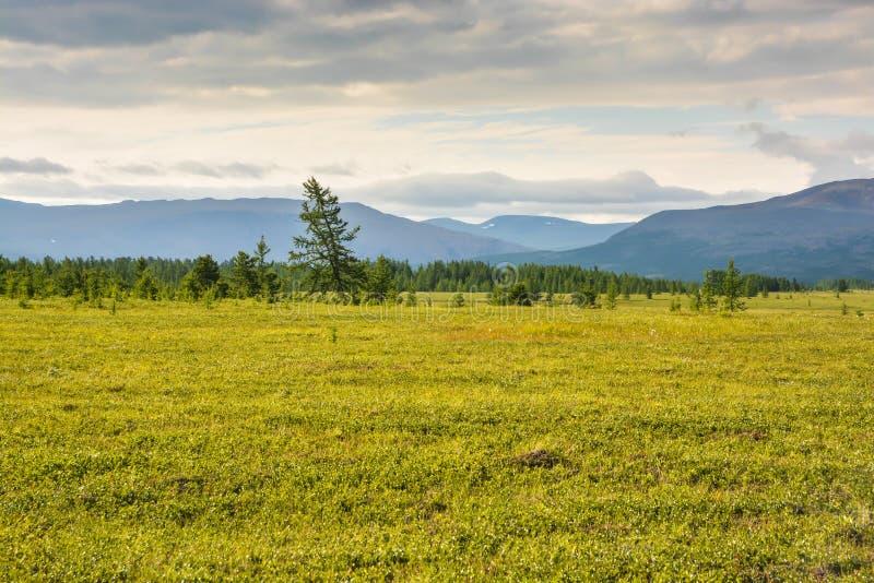 Pogórze tundra zdjęcia stock