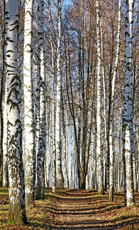 Pogodna ścieżka w jesień Października lesie obrazy stock