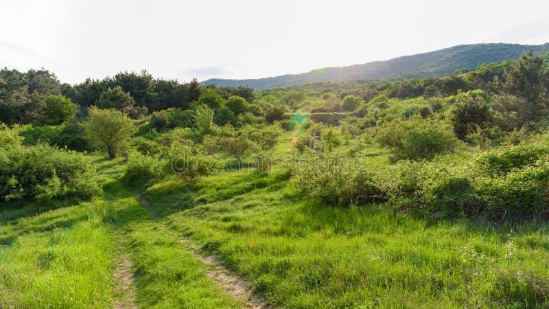 Pogodna droga lasowy zmierzchu krajobraz obrazy royalty free