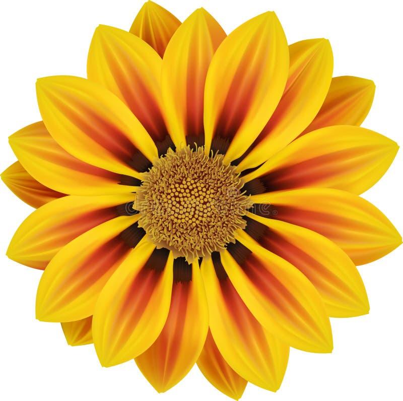 pogodna kwiat pomarańcze ilustracja wektor