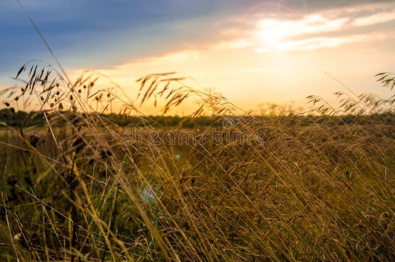 Pogodnego backlight kukurydzany pole zdjęcia stock