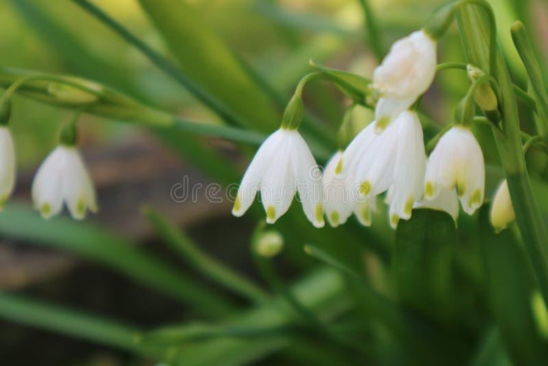 Pogodni kwiaty zdjęcie royalty free