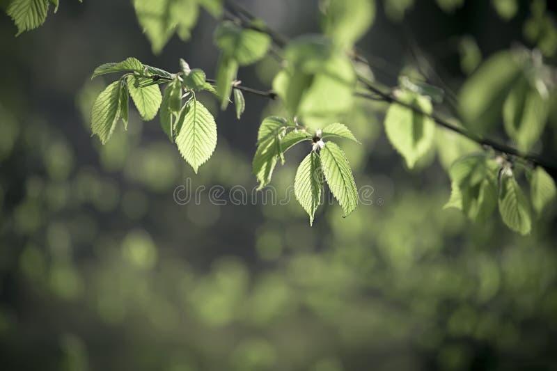 Download Pogodni zieleń liście zdjęcie stock. Obraz złożonej z sezon - 53781152
