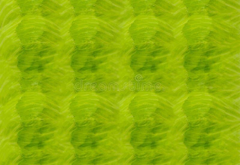 Pogodny świeży liść zielonej sałaty naturalna tekstura sałata, tło jarzynowa soczysta zielona horyzontalna baza fotografia royalty free