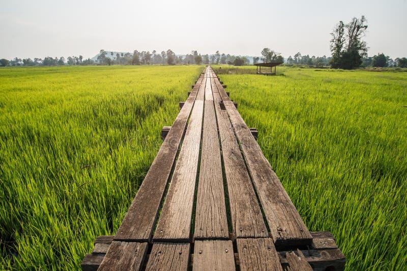 Pogodny świt w polu w Tajlandia zdjęcia stock