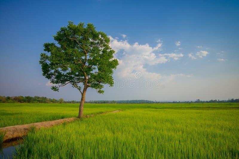 Pogodny świt w polu w Tajlandia obraz stock