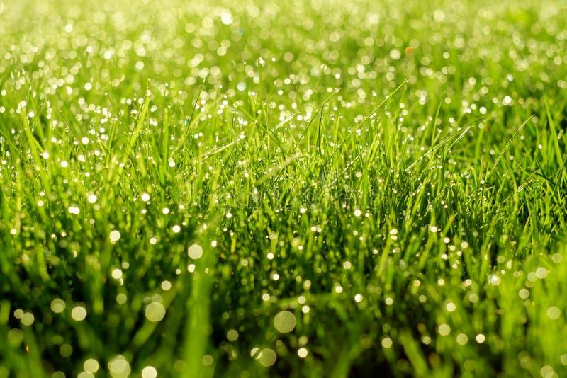 Pogodny abstrakt zieleni natury tło Selekcyjna ostrość obraz royalty free