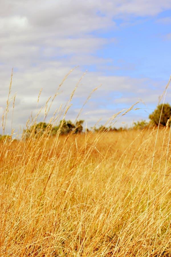 pogodny dzień hayfield obraz royalty free