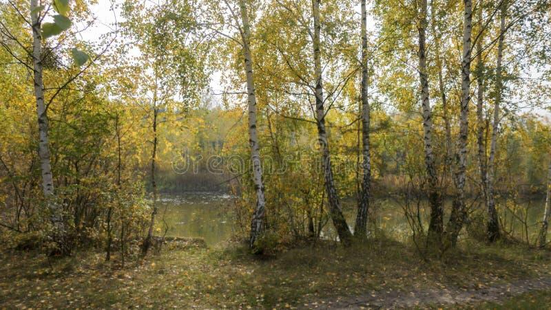 Pogodny jesień dzień na brzeg lasowy jezioro obrazy stock