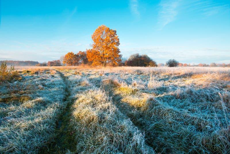 pogodny jesień ranek Mroźna trawa w łące z drzewem z kolorowym ulistnieniem fotografia stock