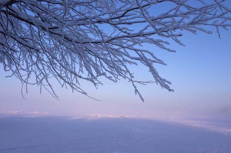 Pogodny mgłowy zima krajobraz obrazy stock