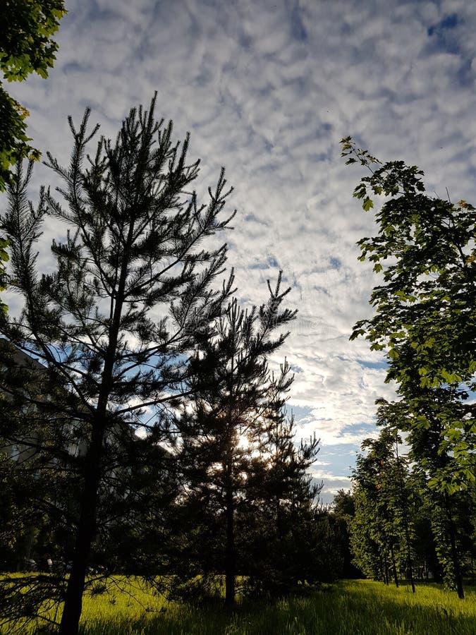 Pogodny miasto park, niebo z świerczyną i fotografia royalty free