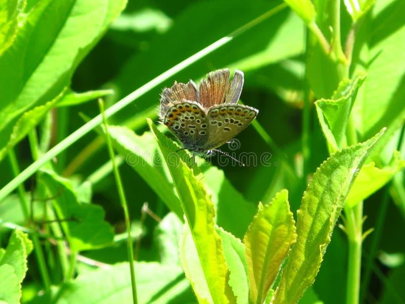 Pogodny, motyl siedzi na zielonej gałąź obrazy stock