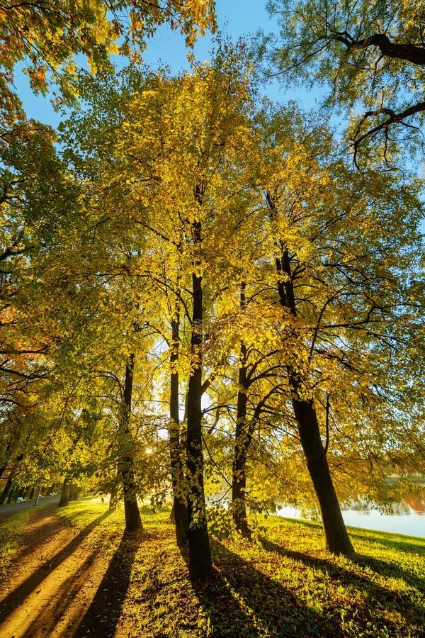 Pogodny ranek w parku zdjęcia royalty free