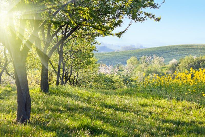 Pogodny wieś krajobraz przy rankiem zdjęcie royalty free