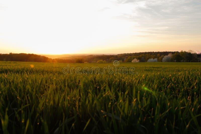 Pogodny wieś wschód słońca, zieleni pola i łąki, niebieskie niebo obrazy stock