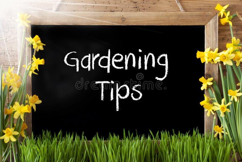 Pogodny wiosna narcyz, Chalkboard, teksta ogrodnictwa porady zdjęcia stock