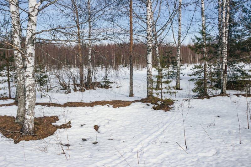 Pogodny zima dzień w lesie obrazy royalty free