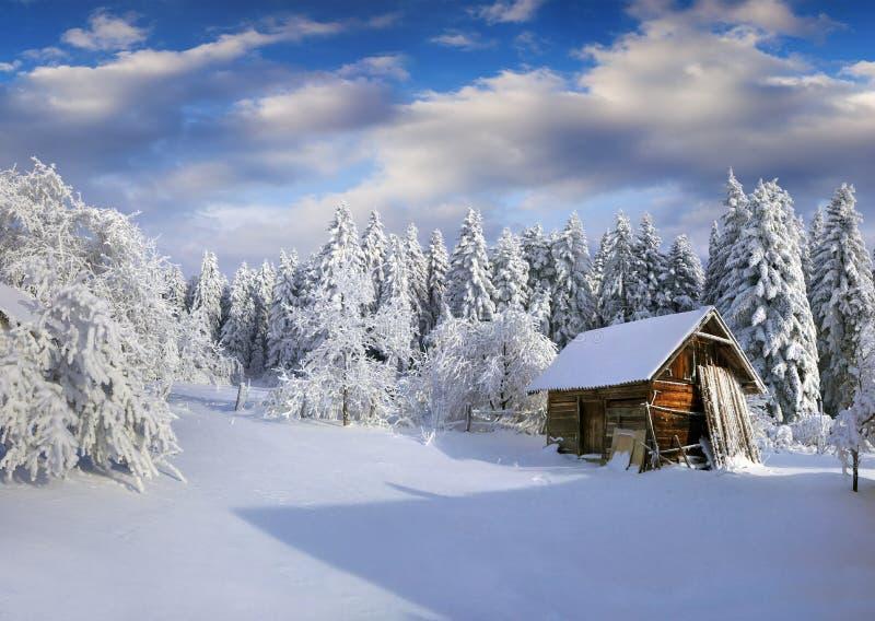 Pogodny zima ranek w Karpackiej wiosce z śniegiem zakrywał tre zdjęcie stock