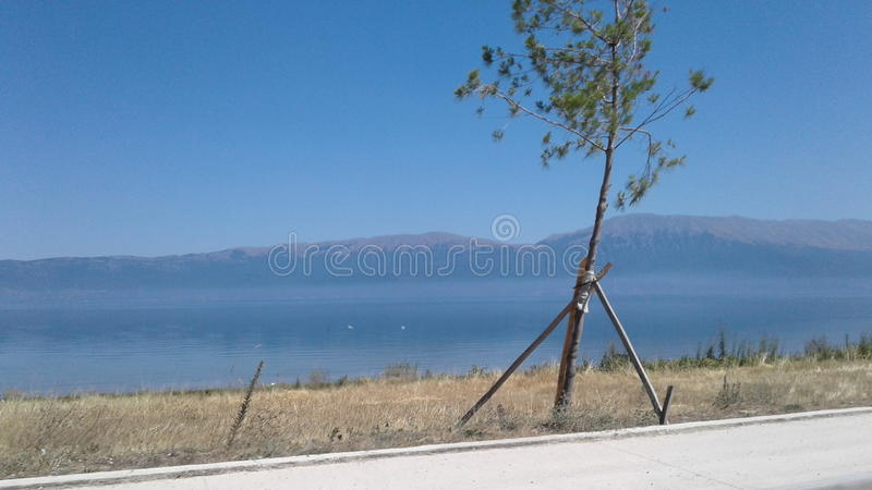 Pogradeci outdoors Podróżuje drzewnego jeziornego Ohrid obrazy royalty free