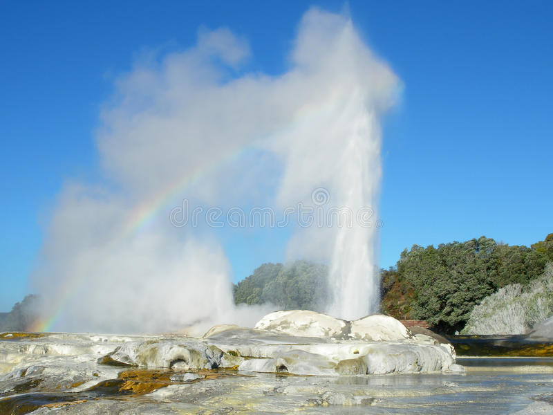 Pohutu Geyser i Rotorua royaltyfria foton