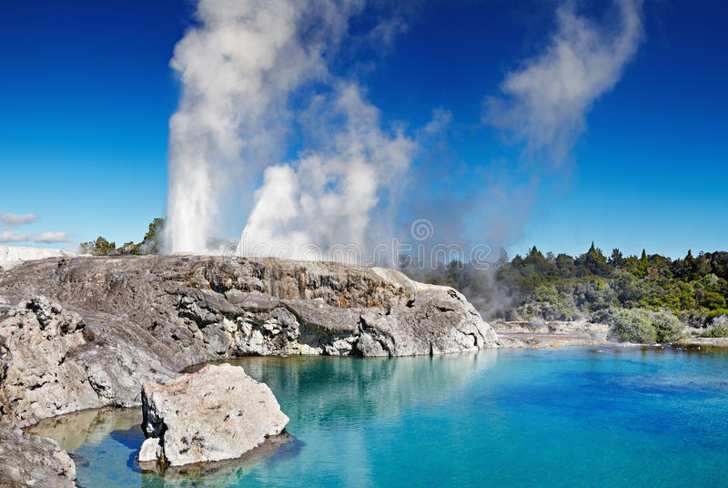 Pohutu Geyser, New Zealand. Pohutu Geyser, Whakarewarewa Thermal Valley, Rotorua, New Zealand stock photos