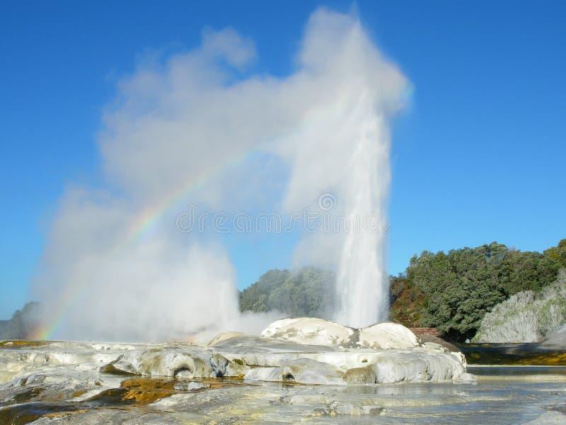 Pohutu Geyser in Rotorua royalty free stock photos