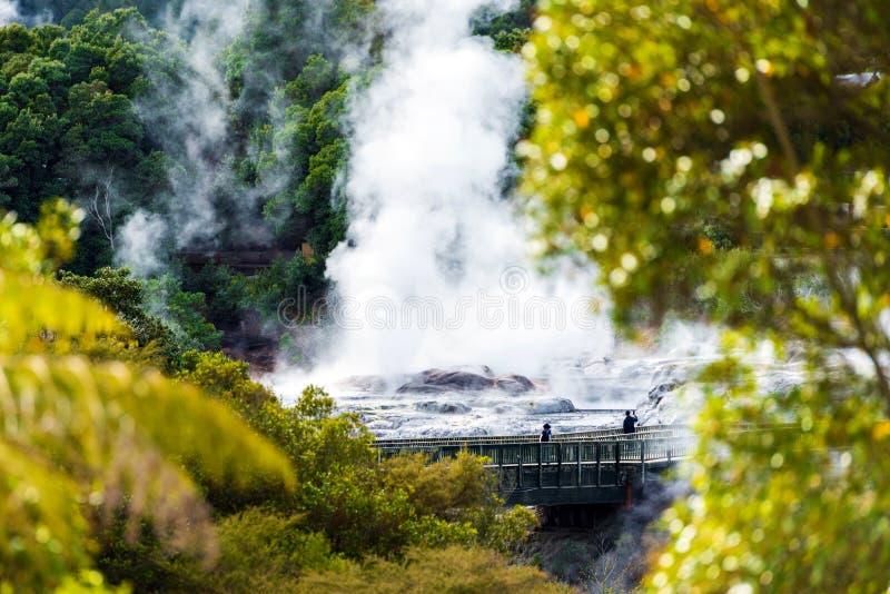 Pohutu Geyser, Te Puia, Rotorua, Nya Zeeland royaltyfria bilder