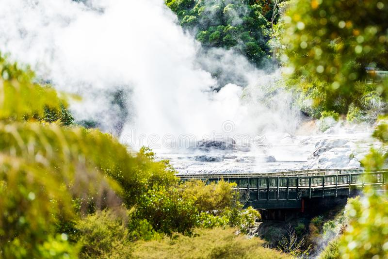 Pohutu Geyser, Te Puia, Rotorua, Nya Zeeland royaltyfri foto