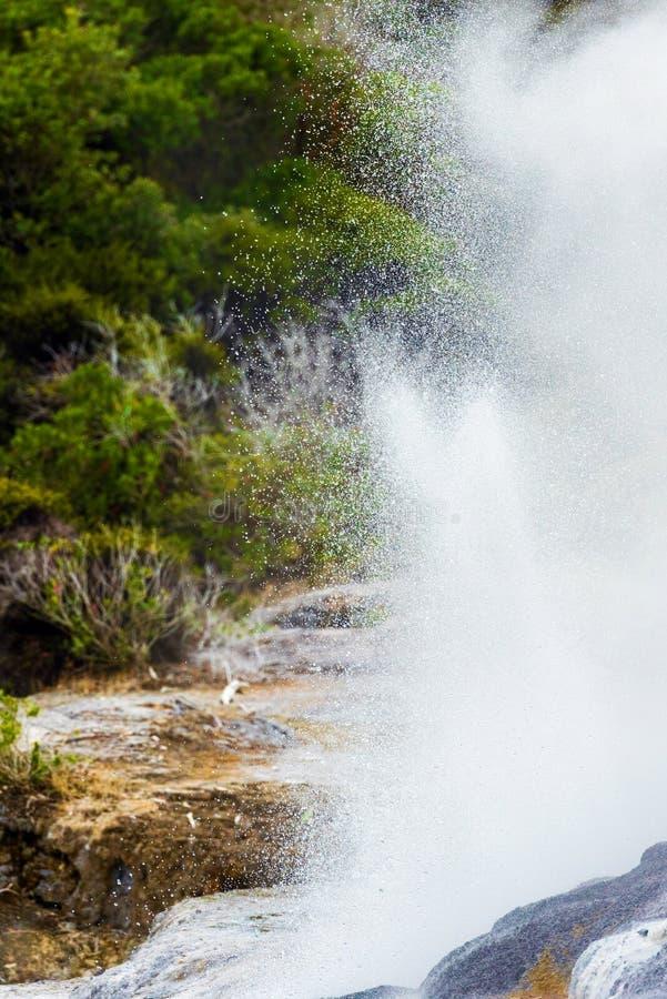 Pohutu Geyser, Te Puia, Rotorua, Nya Zeeland arkivfoton
