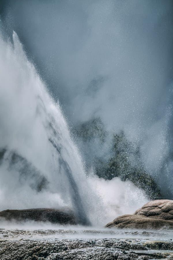 Pohutu geyserutbrott, Nya Zeeland royaltyfri fotografi