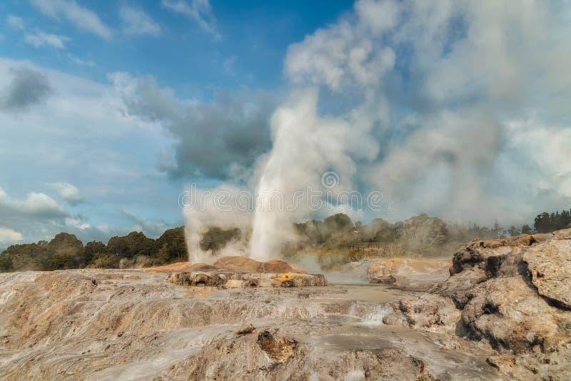 Pohutugeiser, Geothermisch Park in Rotorua, Nieuw Zeeland stock fotografie