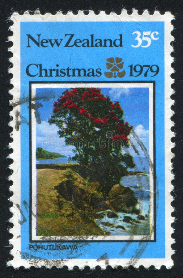 Pohutukawa Baum stockbilder