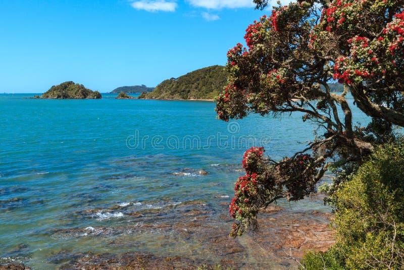 Pohutukawa träd och öar, fjärd av öar, Nya Zeeland royaltyfri bild