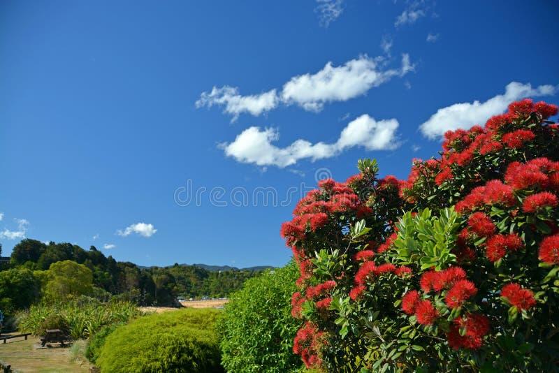 Pohutukawas oavkortad blom på den Kaiteriteri stranden, Nya Zeeland arkivfoto