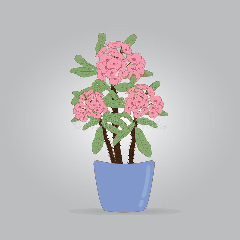 Poi Sian bloemen royalty-vrije stock foto's