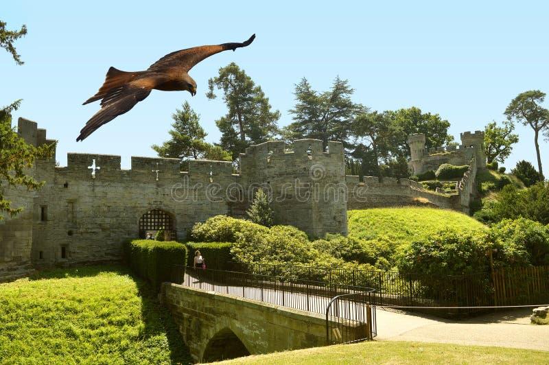 Poiana comune in volo sopra Warwick Castle fotografie stock