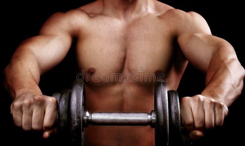 Poids musculaire puissant de séance d'entraînement de fixation d'homme image libre de droits