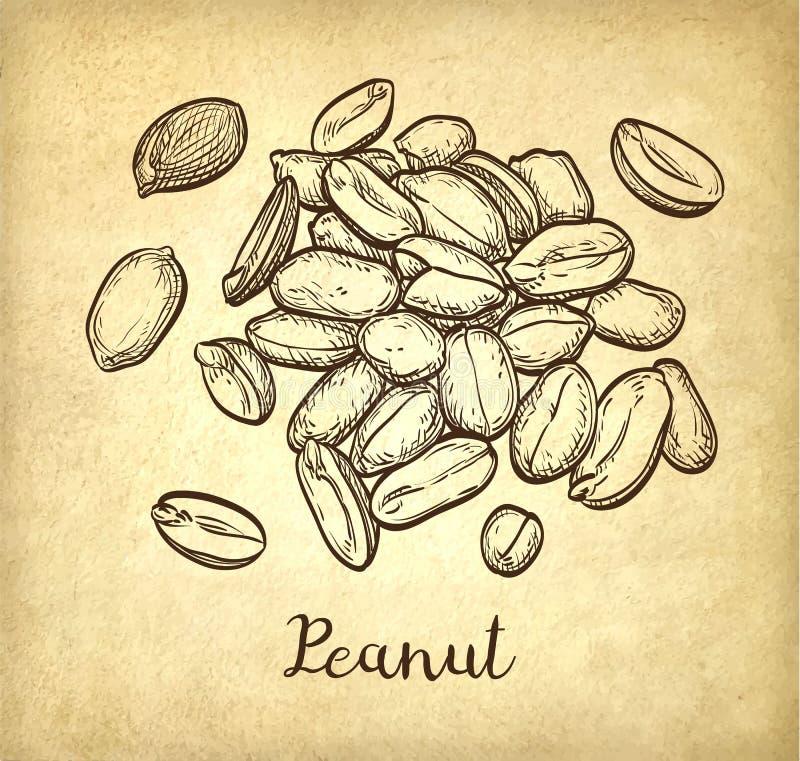 Poignée d'arachide illustration libre de droits