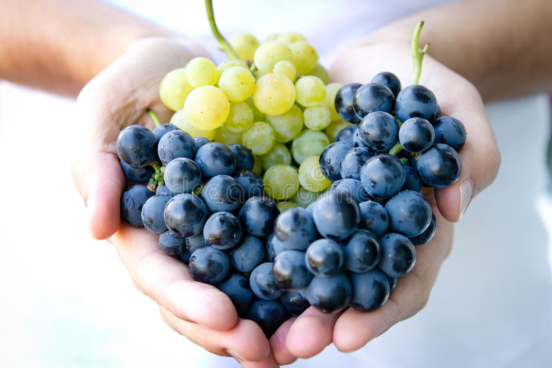 Poignée de raisins photo libre de droits