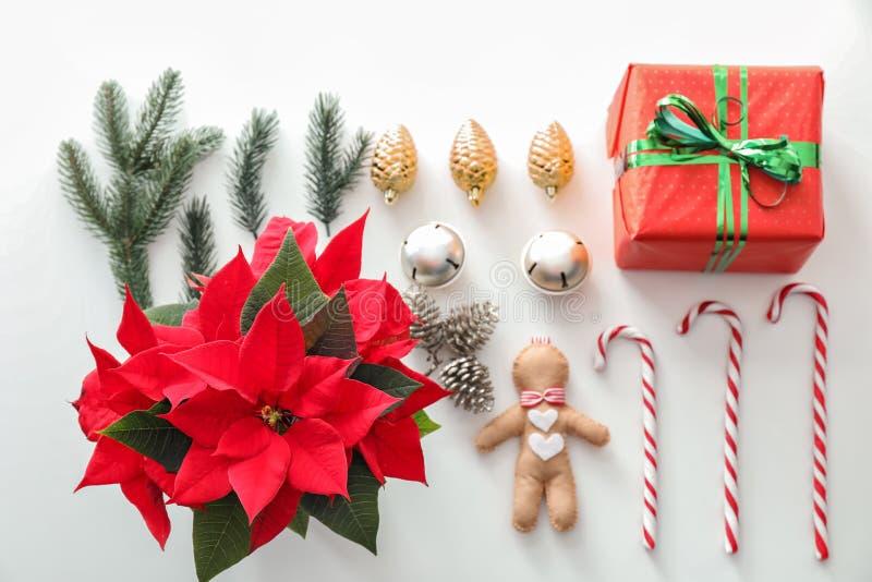 Poinsétia da flor do Natal com caixa de presente e decorações no fundo branco imagens de stock royalty free