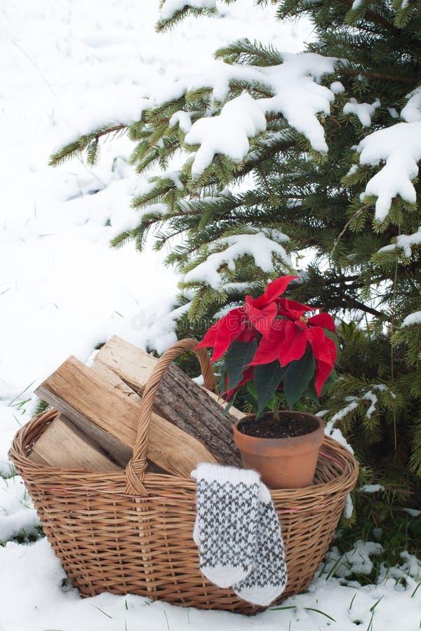 A poinsétia floresce no potenciômetro na cesta com lenha, mitenes de lãs imagens de stock