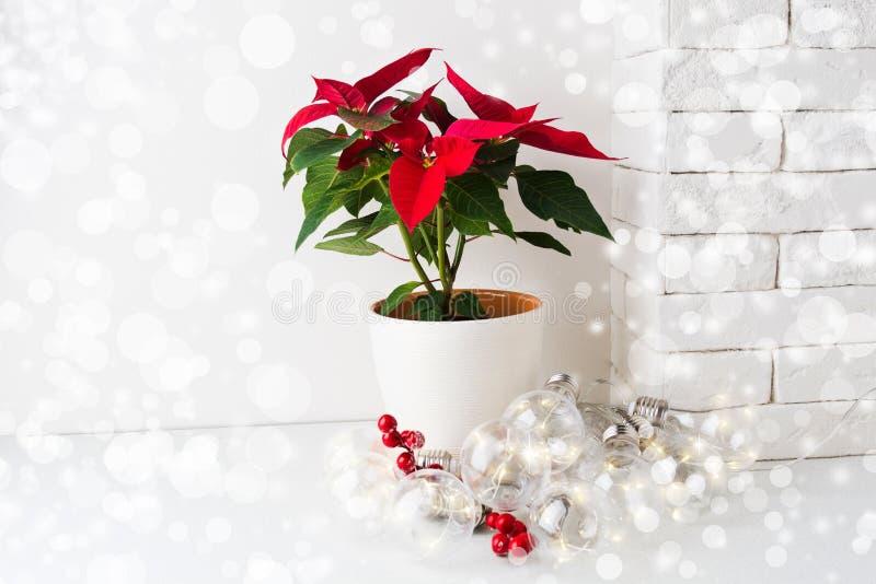 Poinsétia vermelha, flor do Natal no potenciômetro branco com festão e imitação da neve imagens de stock royalty free