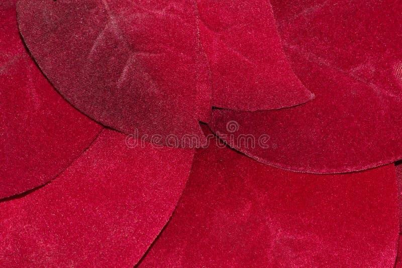 A poinsétia vermelha sae acima de próximo fotografia de stock