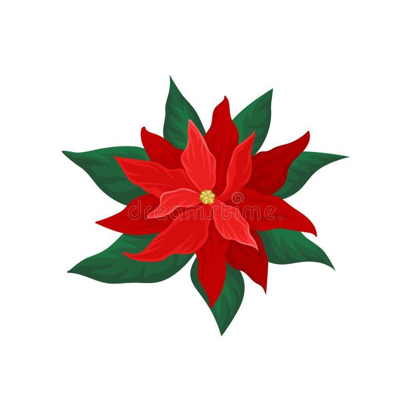 Poinsetia con los pétalos rojos brillantes y las hojas verdes Flor hermosa de la Navidad Tema de la naturaleza Icono plano del ve stock de ilustración