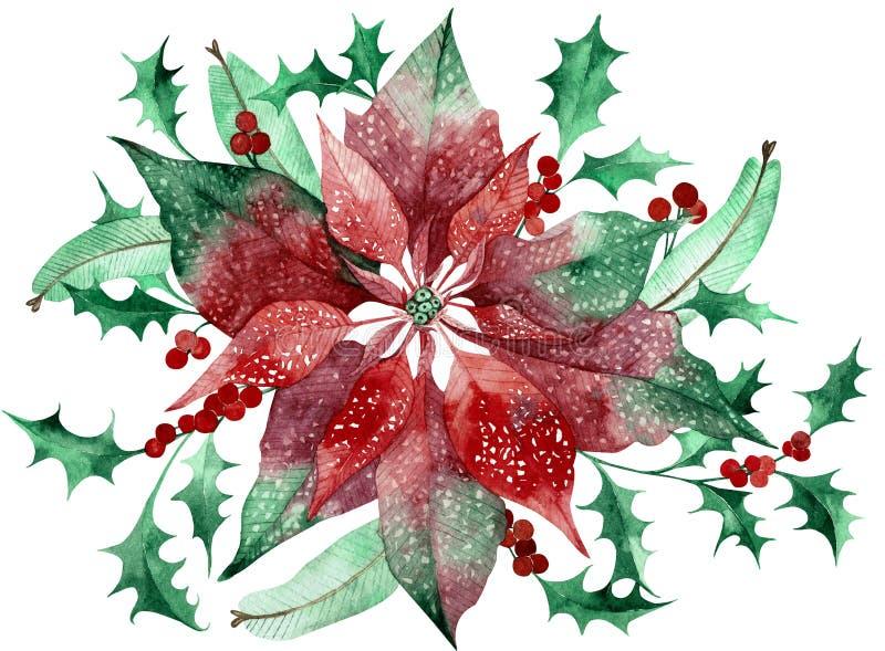 Poinsetia de la acuarela con la decoraci?n floral de la Navidad Flor y plantas tradicionales pintadas a mano stock de ilustración