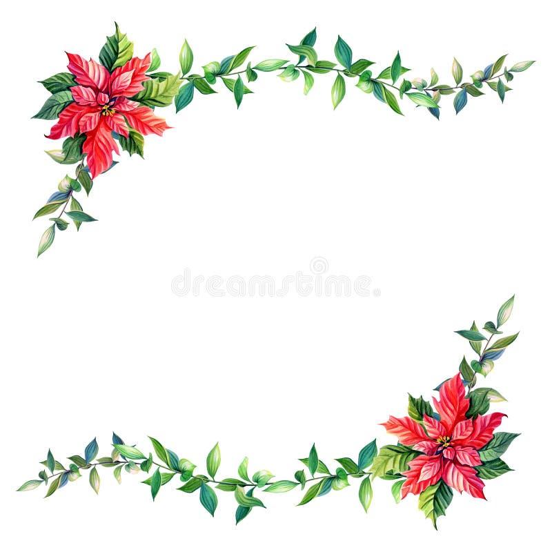 Poinsettia акварели, зеленая хворостина на белой предпосылке звезда ночи изображения фрактали рождества бесплатная иллюстрация